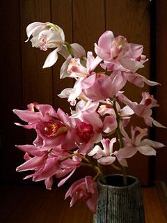 シンビジウム切り花