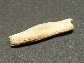 アデニウム種子